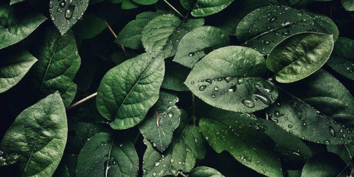 Fakten über Pflanzen